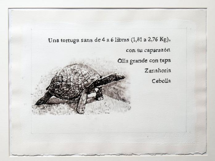 The Seychelles giant tortoise (Aldabrachelys gigantea hololissa)