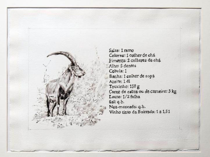 The Pyrenean ibex (Capra pyrenaica pyrenaica)
